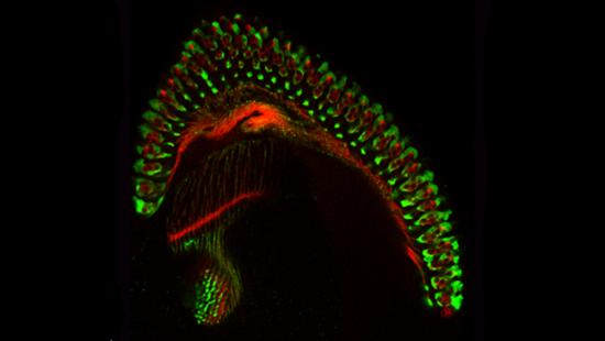 Brain Scan Neuronal Connections
