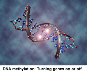 DNA methylation chiropractic