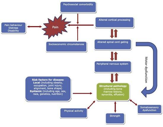 biopsychosocial model structure symptom_550