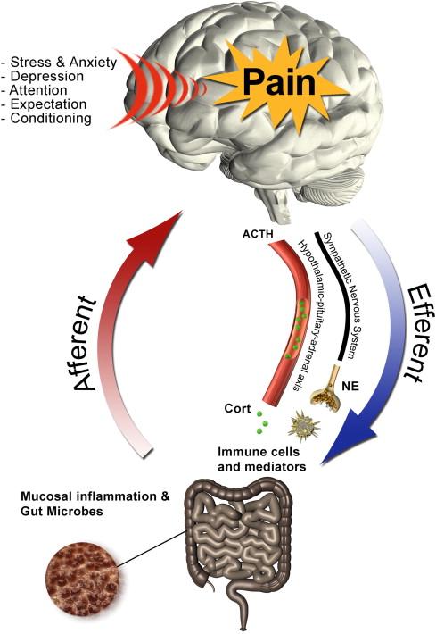 gut brain inflammation irritable bowel chiropractic