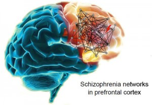 schizophrenia networks in prefrontal cortex
