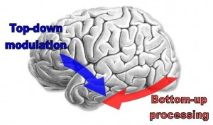 top_down_brain